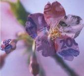 «Весенний экспресс» от Альфа Банка