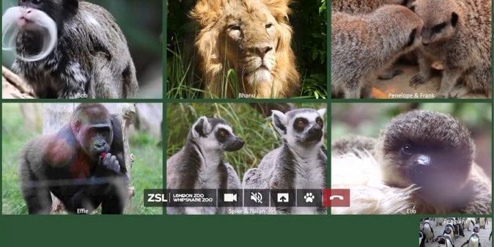 Британські коміки озвучили тварин в кампанії, покликаній врятувати Лондонський зоопарк